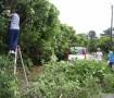 樹木の剪定作業にも挑戦